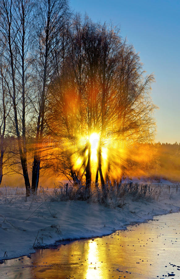 Rayons de soleil de filtrage d'arbre images stock