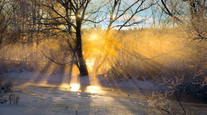 Rayons de soleil filtrés à l'aide de l'arbre nu photo stock