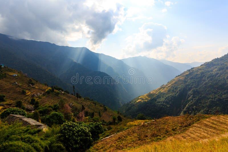 Rayons de soleil s'allumant par les gisements de riz de nuages sur des terrasses en Himalaya, Népal Horizontaux ruraux photographie stock libre de droits