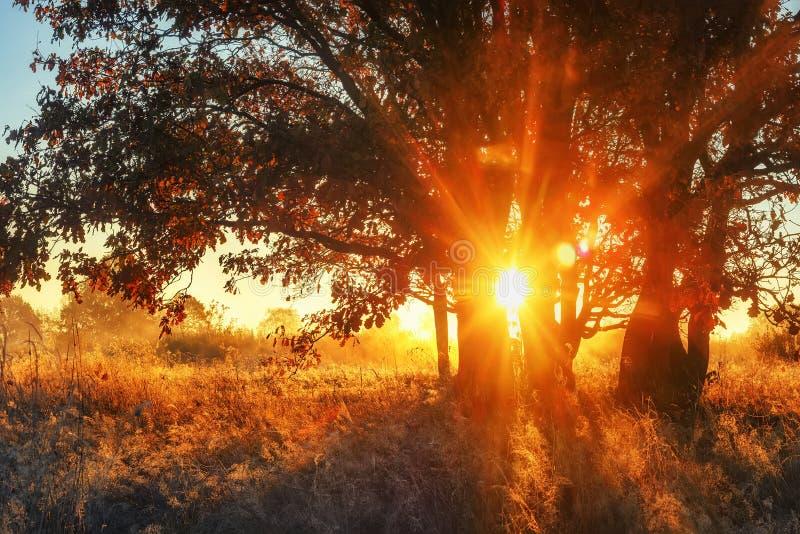 Rayons de soleil vibrants étonnants par des branches d'arbre sur le pré dans le matin d'automne Arbre coloré de paysage d'automne photo stock