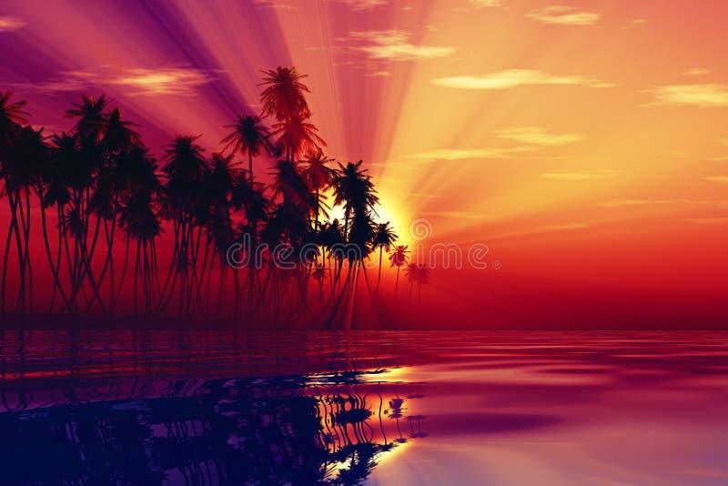 Rayons de Sun à l'intérieur des cocotiers photos stock