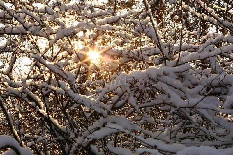 Rayons de Sun dans la forêt neigeuse image libre de droits