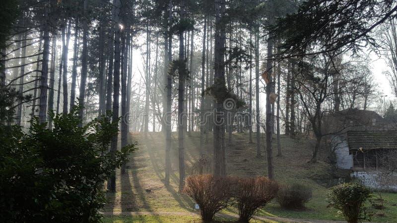 Rayons de Sun dans le brouillard photographie stock