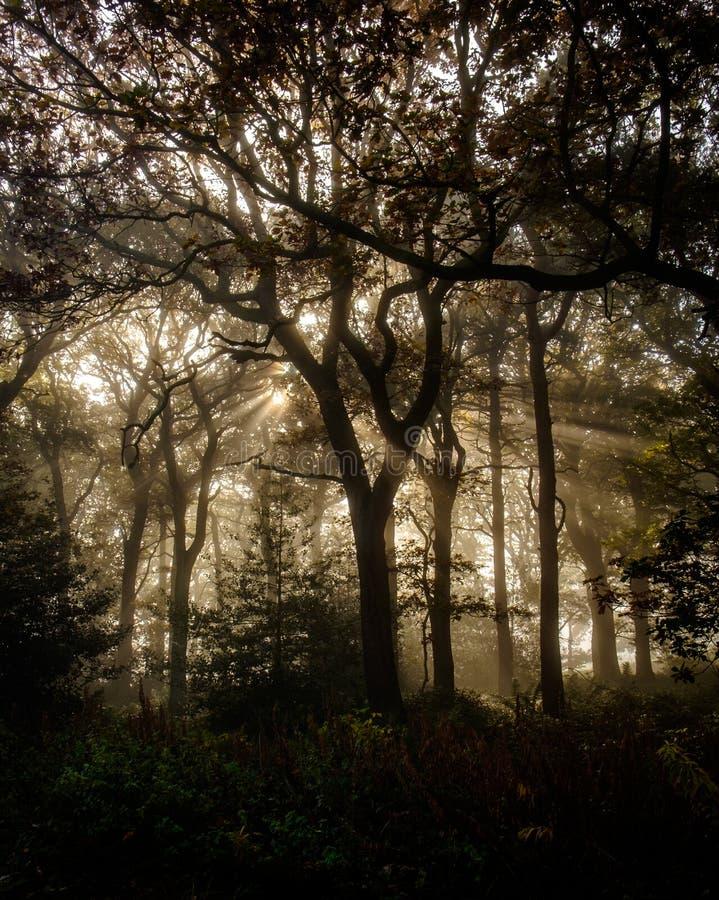 Download Rayons De Sun Dans Les Arbres Photo stock - Image du environnement, automne: 77162302