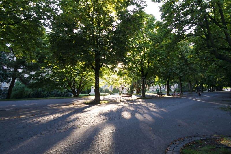 Rayons de Sun par des arbres photographie stock