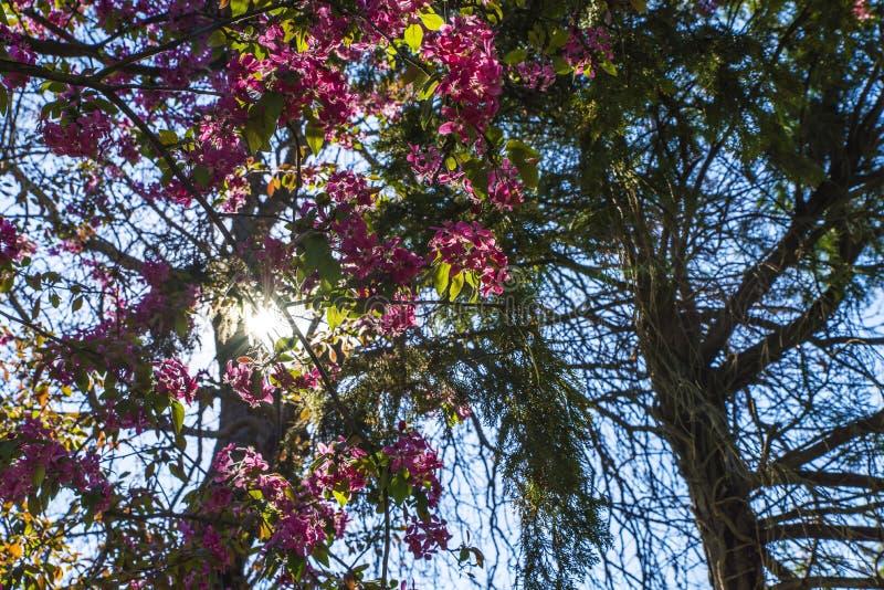Rayons de Sun par des branches photos stock