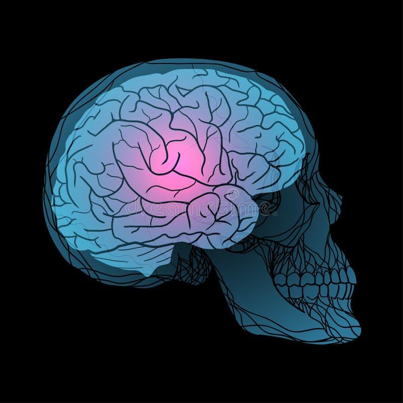 Rayons X du crâne humain avec le cerveau illustration de vecteur