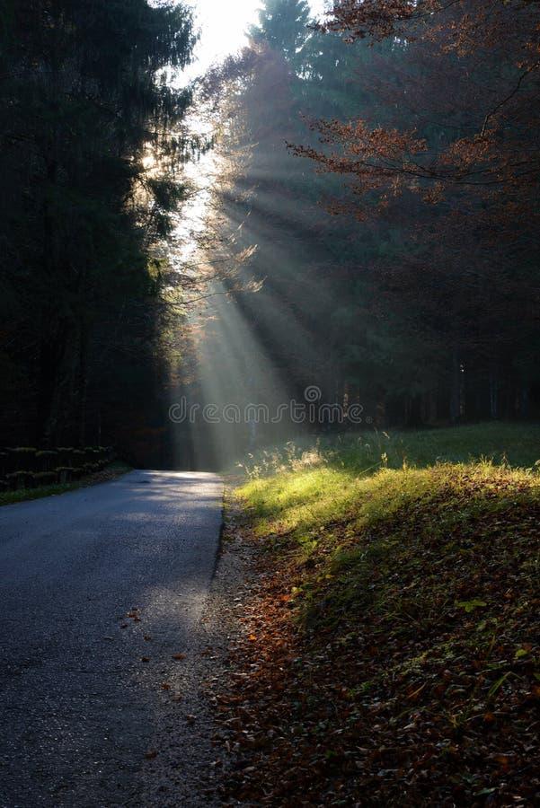 Rayons du soleil de matin par le chemin forestier images stock