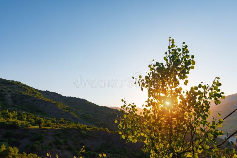 Rayos brillantes del sol de la mañana a través de la corona del árbol imágenes de archivo libres de regalías