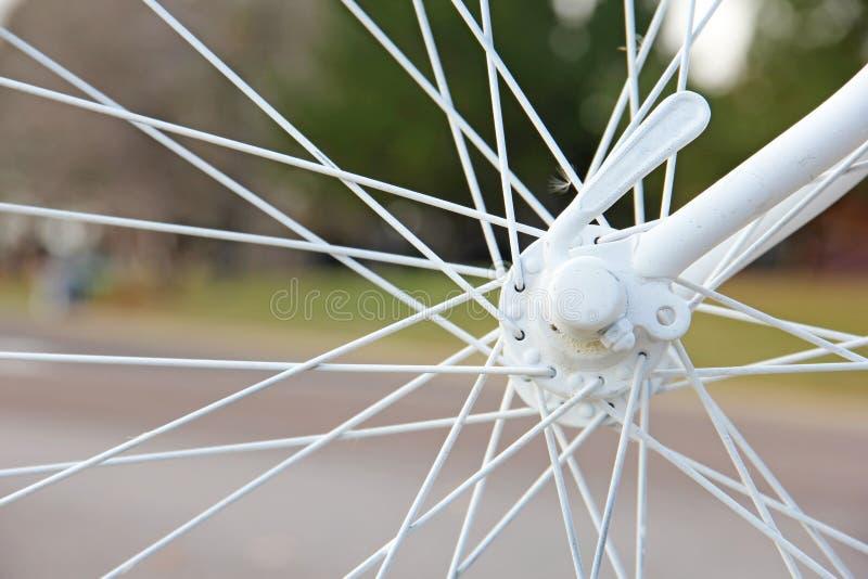 Rayos de la bicicleta conectados con el árbol fotografía de archivo libre de regalías