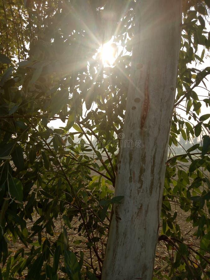 Rayos de la sol a través de un cuerpo de la planta fotos de archivo