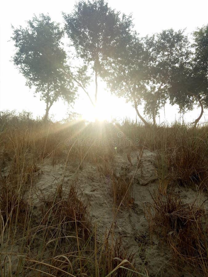 Rayos de la sol a través de un cuerpo de la planta fotos de archivo libres de regalías