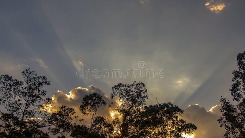 Rayos de sol detrás de un bosque del árbol de eucalipto imagenes de archivo