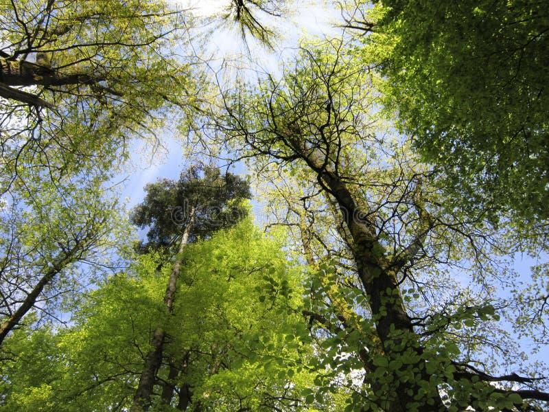 Rayos de sol en el bosque imagen de archivo libre de regalías