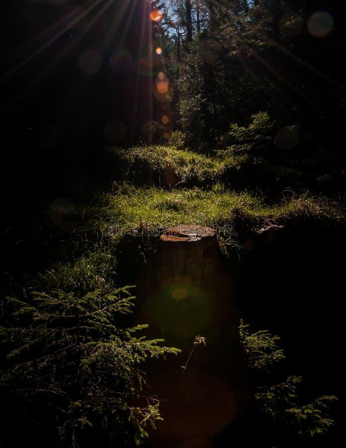 Rayos de sol en las maderas imagen de archivo libre de regalías