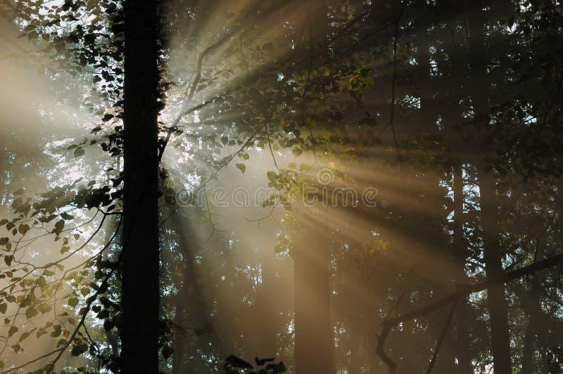 Rayos de Sun fotografía de archivo