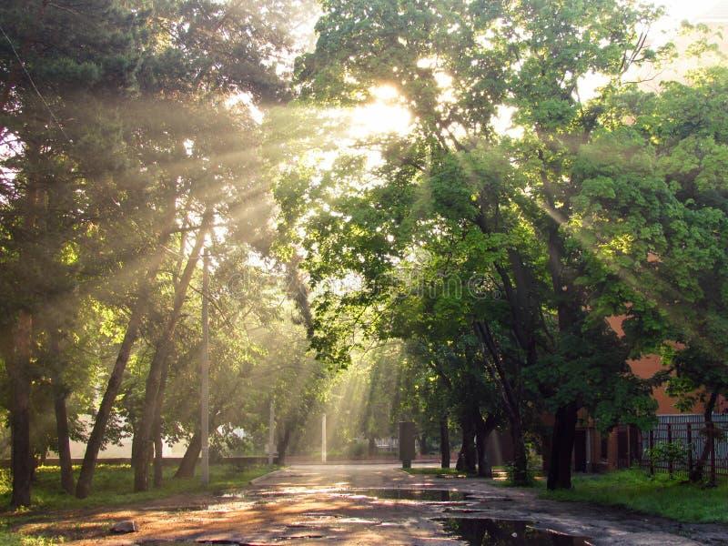 Rayos de Sun en el amanecer imágenes de archivo libres de regalías