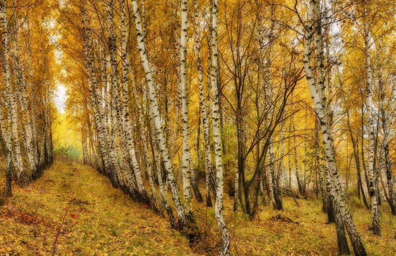 Rayos del sol del bosque del otoño en el bosque imagen de archivo