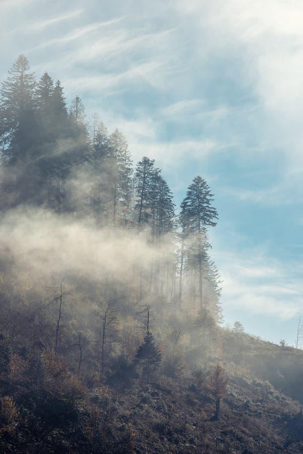 Rayos del sol que se rompe a través de la niebla fotografía de archivo libre de regalías