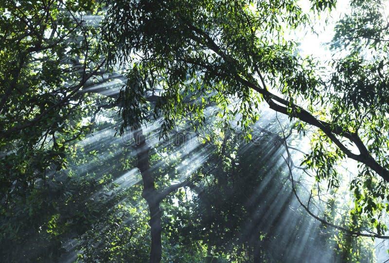 Rayos hermosos de la luz del sol que brillan a través de los árboles fotos de archivo
