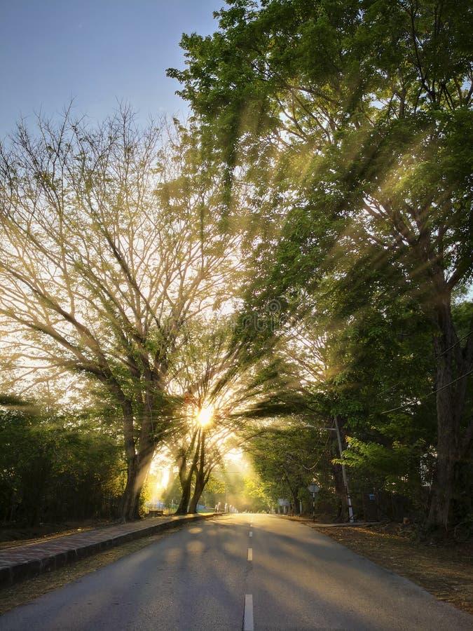 Rayos ligeros hermosos a través de los árboles foto de archivo libre de regalías