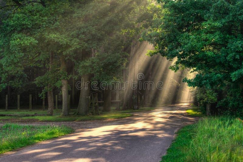 Rays of light royalty free stock photo