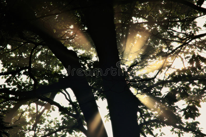Download Rays of light through tree stock photo. Image of branches - 3782274