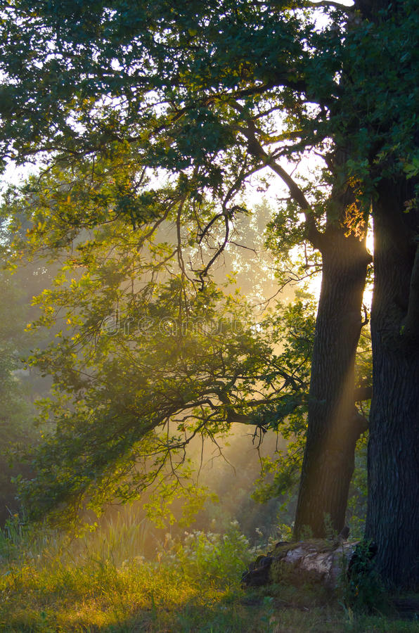 Rays of the morning sun royalty free stock images