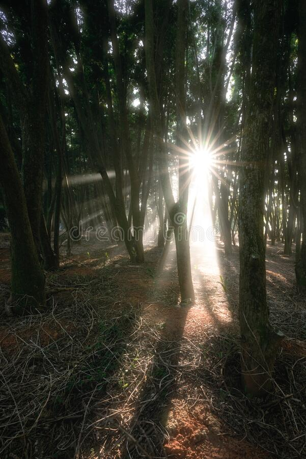 Free Rays Of Warm Light Through The Trees Of A Forest Near Taichung In Taiwan Stock Photos - 185276673