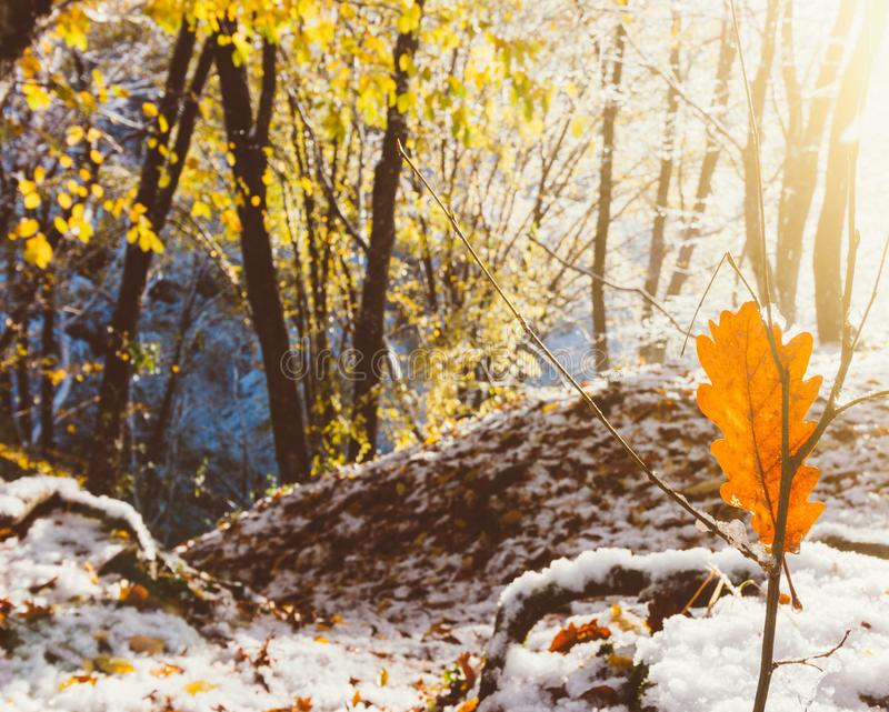 the rays of the rising sun and the first snow in the morning autumn forest royalty free stock photo