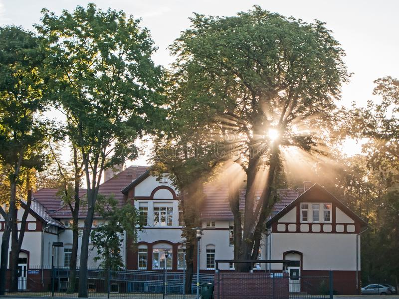 Rays of rising sun among trees. Large, tall deciduous trees. It`s morning. A light fog is drifting in the crowns. The rays of the rising sun pierce through the royalty free stock photography