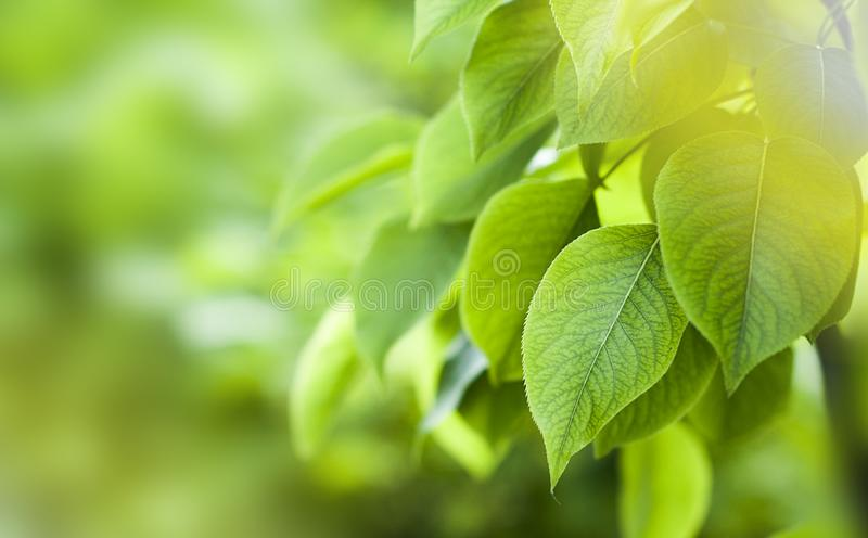 green foliage of the trees stock images