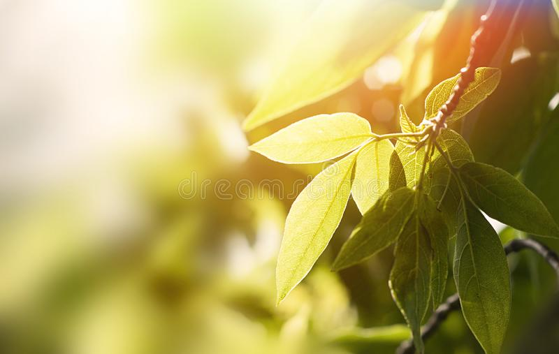 green foliage of the trees stock image