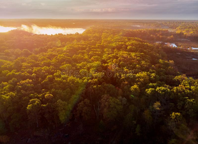 Rays of the sun breaking through the fog in the forest royalty free stock images