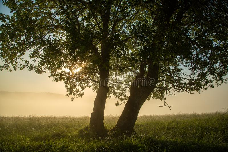 Rays of the sun breaking through tree branches in the early morning. Glade with green grass on a background of fog and mountain peaks. Tranquil scene royalty free stock photography