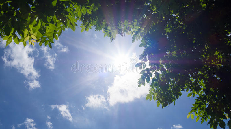 Rays of the sun with green leaves tree against the blue sky and white clouds royalty free stock images