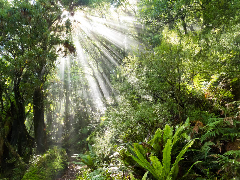 Rays of sunlight beam trough dense tropical jungle royalty free stock image
