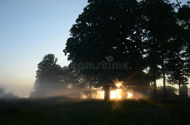 Rays of sunlight dawning rural scene trees landscape. Sun rays shining through tree branches onto field in rural scene farmhouse and silo at far right on horizon royalty free stock image