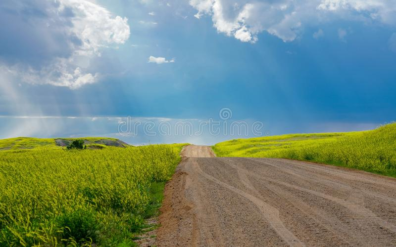 Rays of sunshine shining down on a country road and fields of yellow wildflowers and green grass. Country road in South Dakota near the Badlands on a sunny day royalty free stock photo