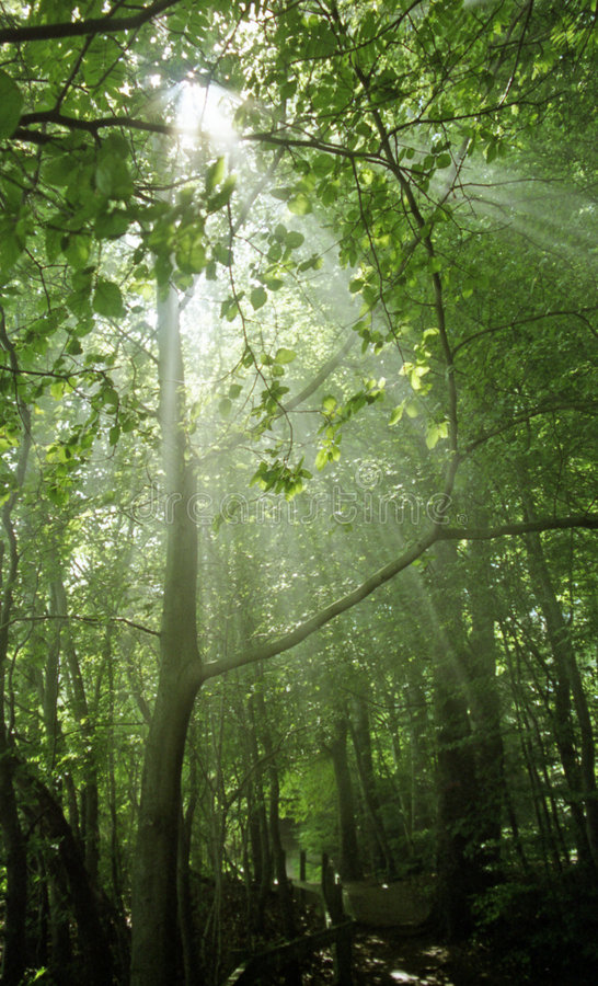 Rays of sunshine in a wood royalty free stock photo
