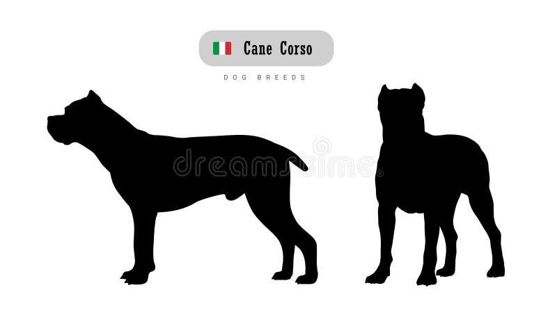 Raza Cane Corso del perro stock de ilustración