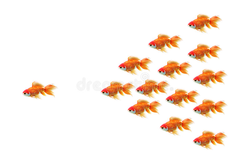 Raza del Goldfish imagen de archivo libre de regalías