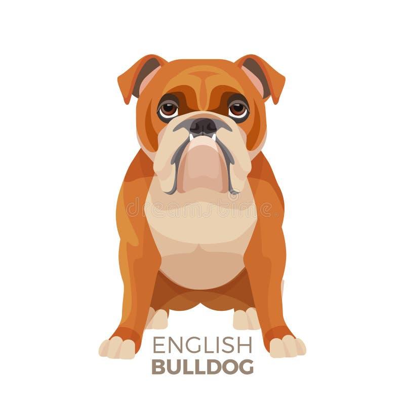 Raza mediana del dogo británico, dogo inglés muscular, perrito fuerte libre illustration