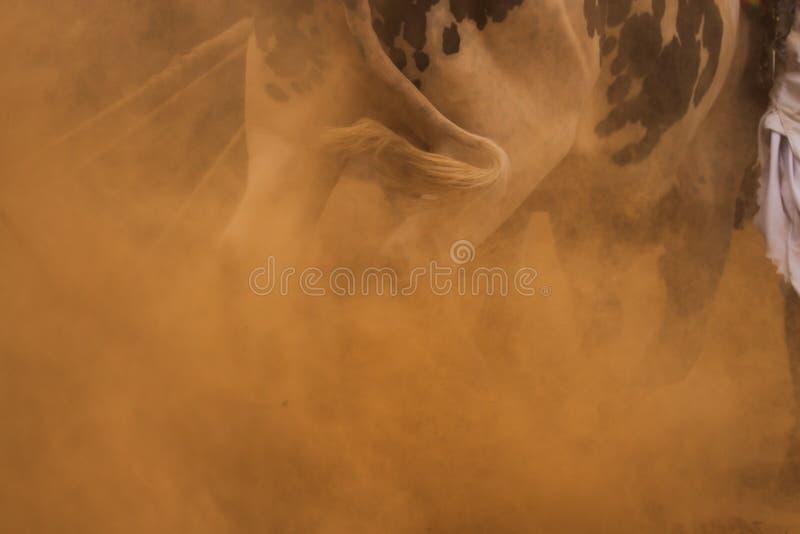 Raza tradicional del toro de Punjab imagenes de archivo