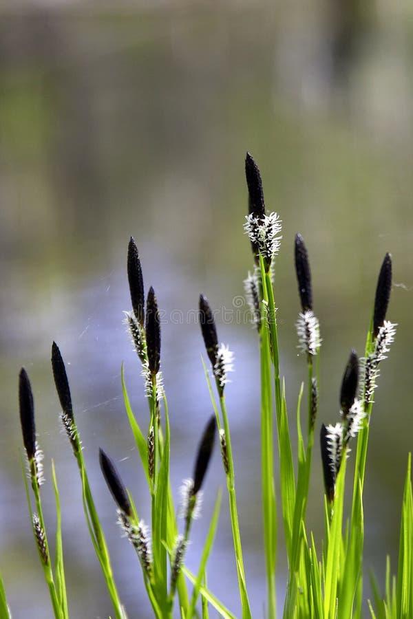 Download Razem wiosna zdjęcie stock. Obraz złożonej z brzeg, lakeside - 126200