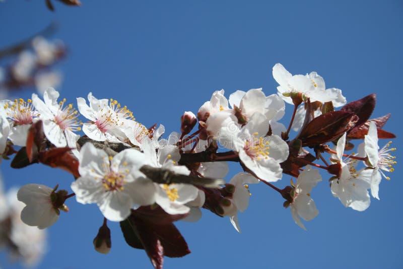 razem wiosna obrazy stock