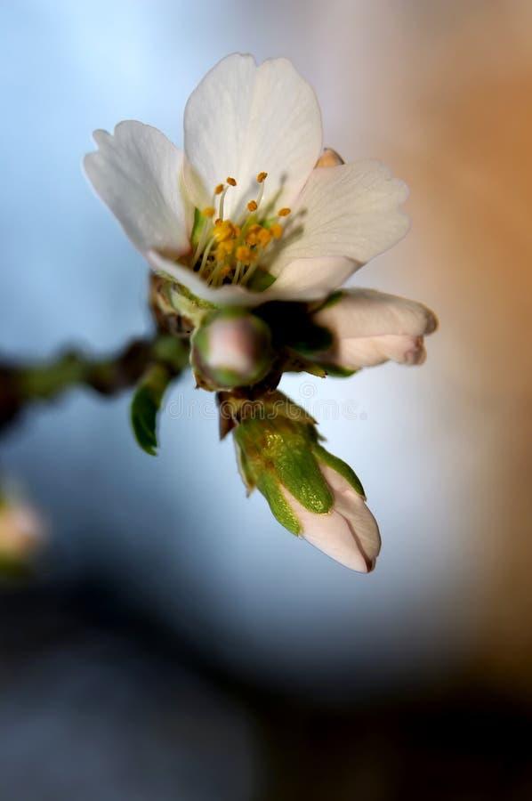 razem wiosna zdjęcia stock