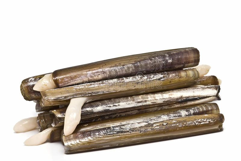 Razor clams. royalty free stock images