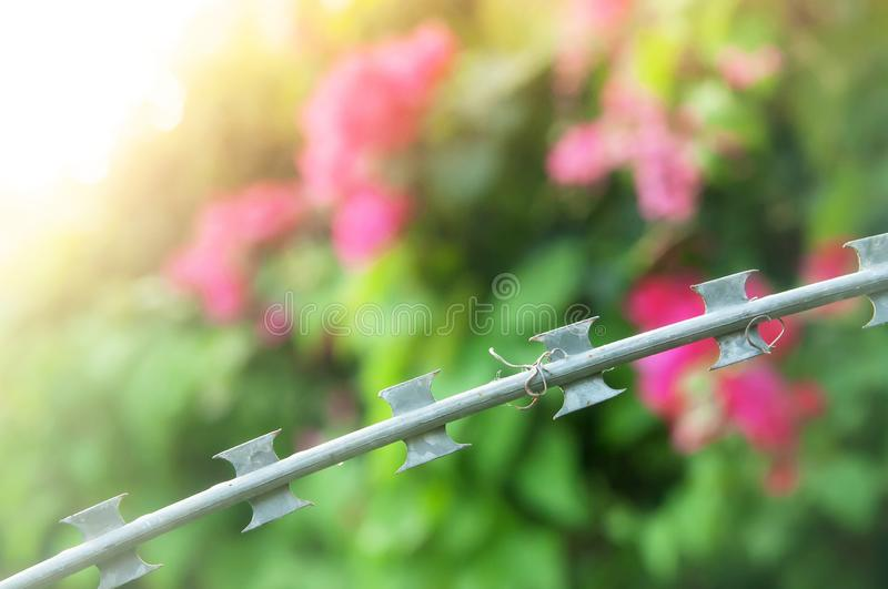 Razor wire on fence of a private area, the sun setting through bougaville backgrounds stock photo