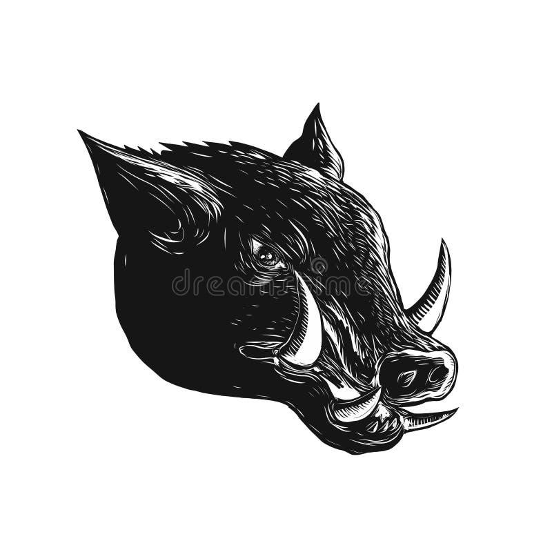 Free Razorback Wild Boar Scratchboard Royalty Free Stock Images - 104447209